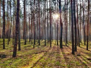 Лес вокруг комплекса